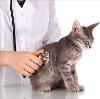 Ветеринарные клиники в Переславле-Залесском